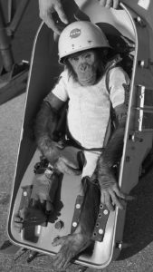 A photo of Ham the Astrochimp